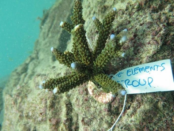 Coral Planting Around Nusa Lembongan